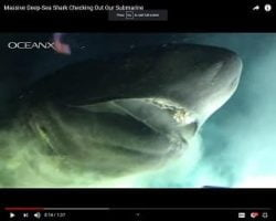Monster Prehistoric Shark Attacks Submarine